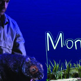 diary of a wombat monkey baa bar theatre company for young people